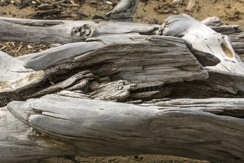 Szczegół bielący driftwood logował się Flagstenga jezioro, północno-zachodni obrazy stock