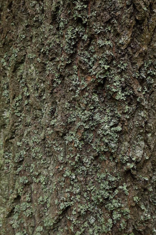 Szczegół drzewny bagażnik z zielonym mech fotografia stock