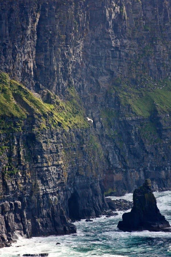 Szczegół falezy Moher, Clare okręg administracyjny, Irlandia fotografia royalty free