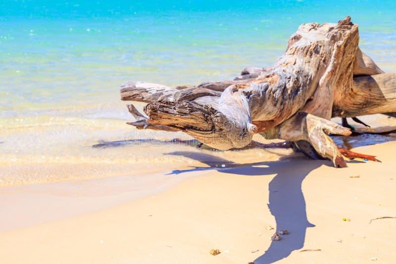 Szczegół korzeń, driftwood na Karaibskiej plaży z t wielcy/ fotografia royalty free