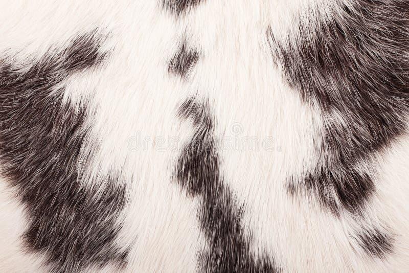 Szczegół królika futerko obrazy royalty free