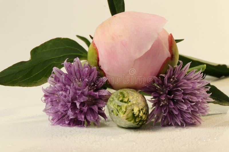 Szczegół na kwiacie peonia z szczypiorkami kwitnie pod peonią obrazy stock