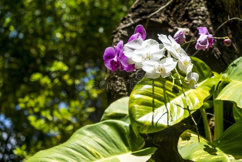 Szczegół orchidea w jawnym ogródzie fotografia stock