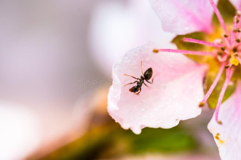 Szczegół piękny kwitnący drzewo w wiośnie fotografia stock