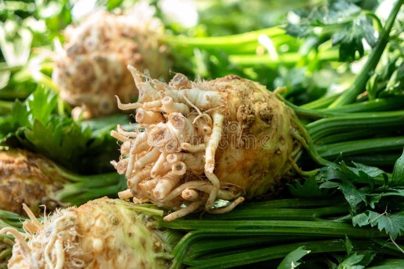 Szczegół pille celeriacs z badylami i liście przy rolnikami wprowadzać na rynek zdjęcia stock
