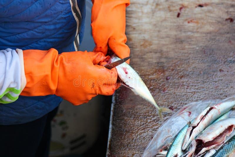 Szczegół ręki w pomarańczowych rękawiczkach które patroszyją małej ryby Rybim przerobem ja jest konieczny ciągnąć żyłki za zdjęcie royalty free