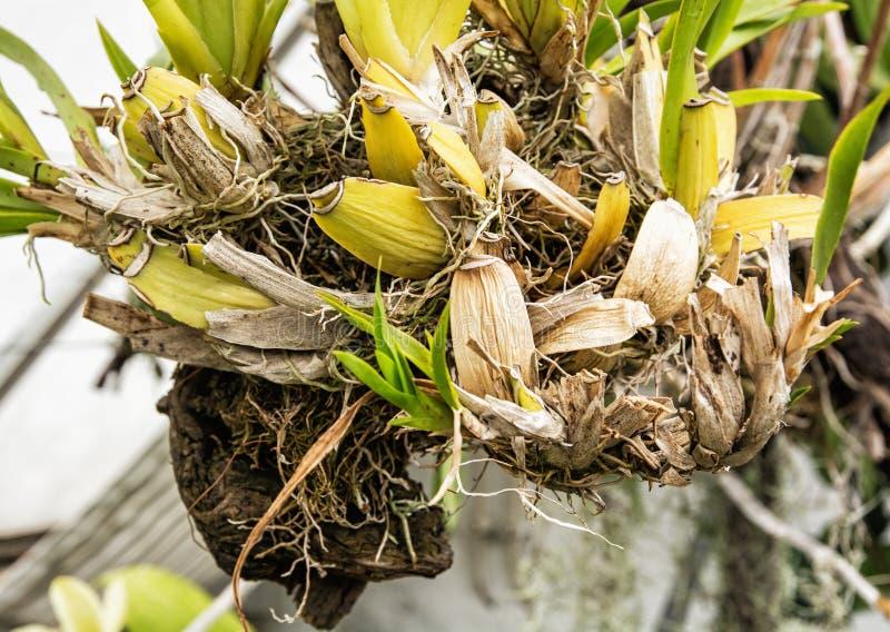 Szczegół specjalna tropikalna roślina, uprawia ogródek temat zdjęcie royalty free