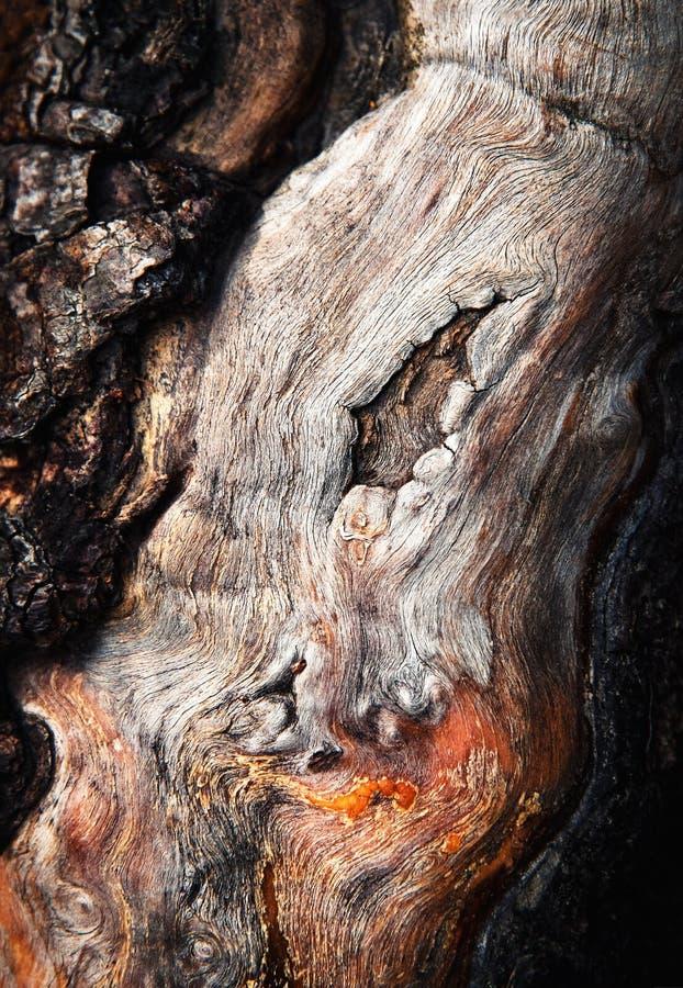 Szczegół stary szpotawy drewno zdjęcie royalty free