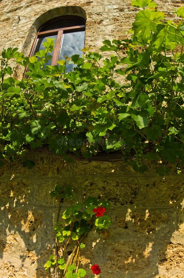 Szczegół xiii wiek RaÄ  monaster ściana z winogradem i czerwienią kwitnie zdjęcie royalty free