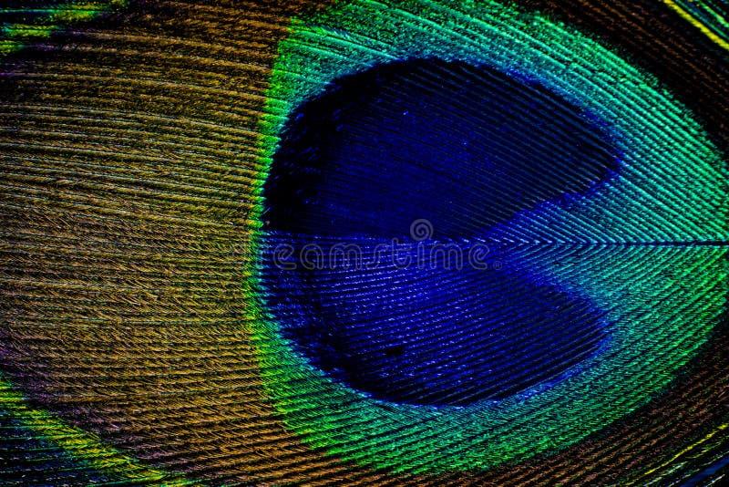 Szczegół zamknięty pawia piórka oko up zdjęcia stock