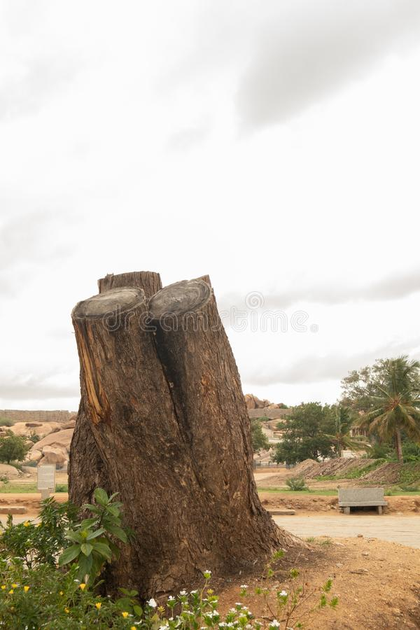 Szczegółowy cięcie zestrzelał drzewną barkentynę i korzenie w zakończeniu w górę Hampi przy, India fotografia royalty free