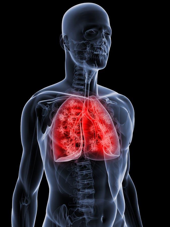 Szczegółowy Płuco Zdjęcia Stock