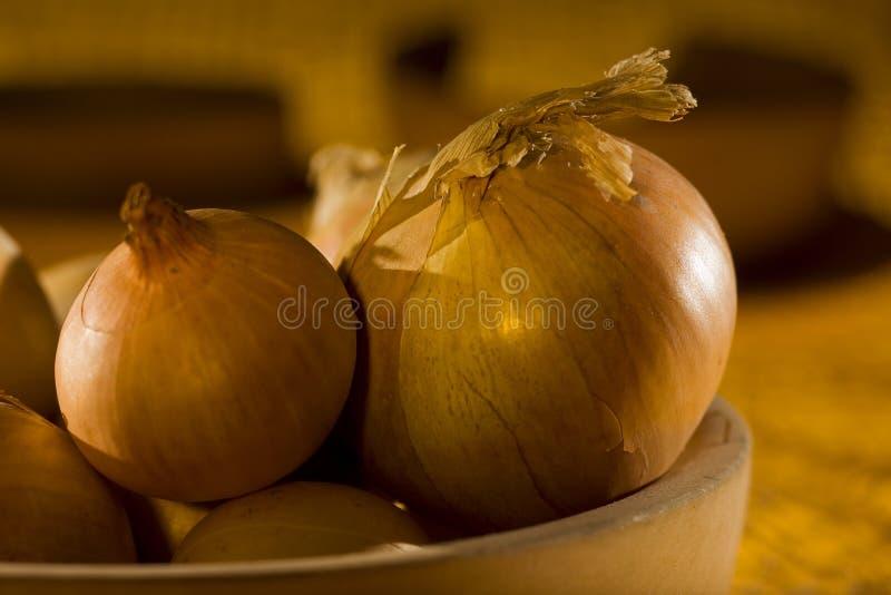 szczegółu życia cebule wciąż obrazy royalty free