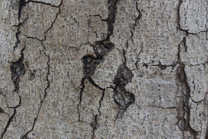 szczegółu drzewo zdjęcia stock
