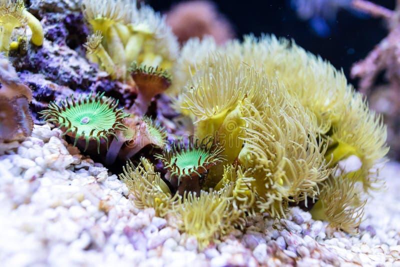 Szczegóły rafa koralowa obrazy stock