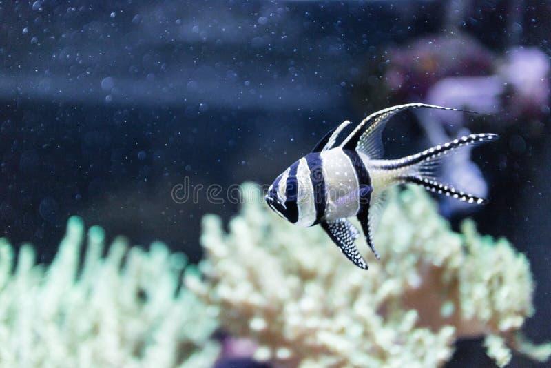 Szczegóły rafa koralowa fotografia stock