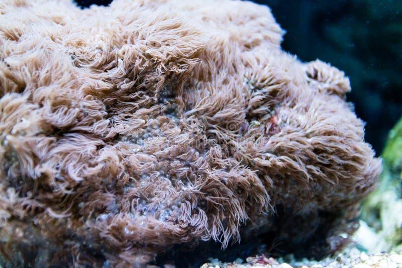 Szczegóły rafa koralowa zdjęcia royalty free