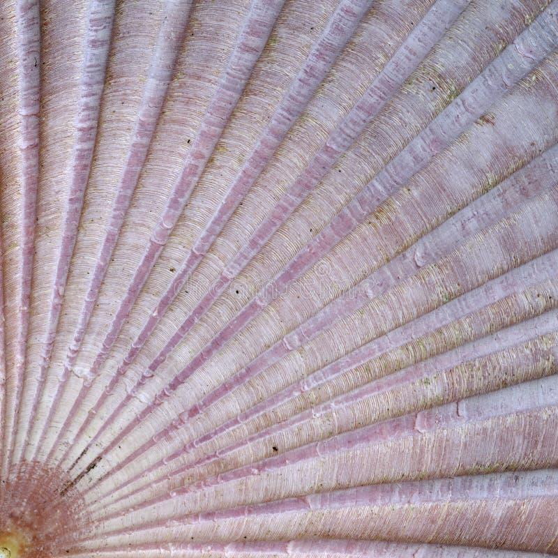 Szczegóły skorupy morskiej zdjęcia stock