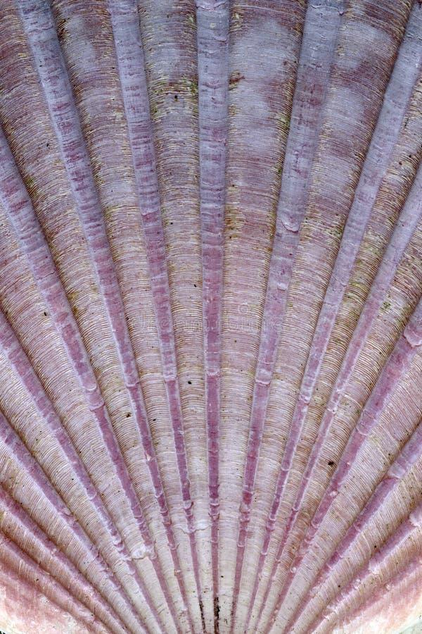 Szczegóły skorupy morskiej zdjęcie stock