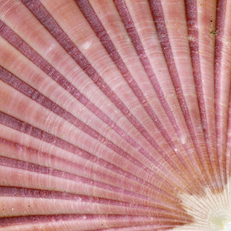 Szczegóły skorupy morskiej fotografia stock