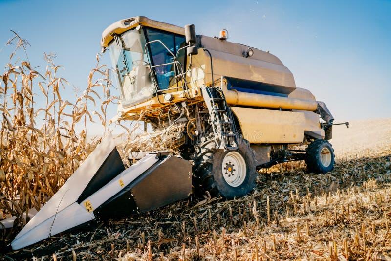 Szczegóły syndykata żniwiarza zbieracka kukurudza i zbierać podczas jesień sezonu zdjęcia royalty free