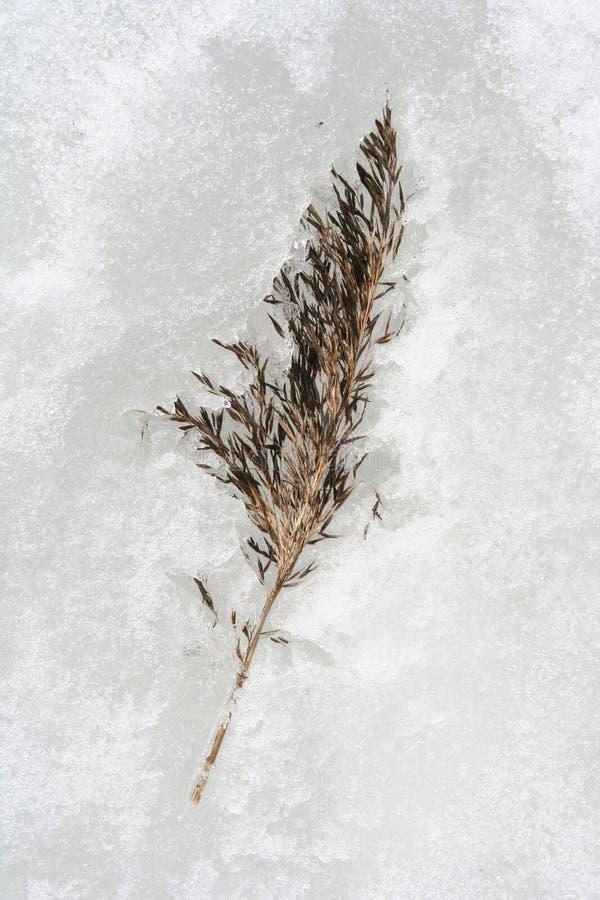 szczegóły zimę zdjęcie stock