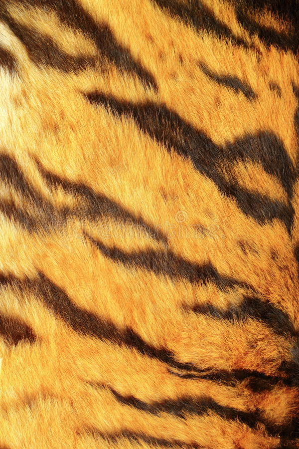Download Szczegół tygrysi lampasy obraz stock. Obraz złożonej z kontrast - 28962193