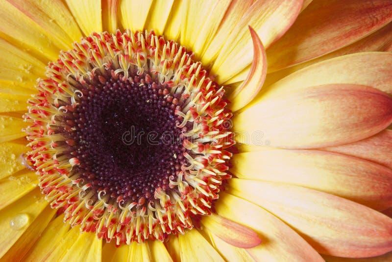 Download Szczegółu kwiat obraz stock. Obraz złożonej z pusty, uprawa - 13342969