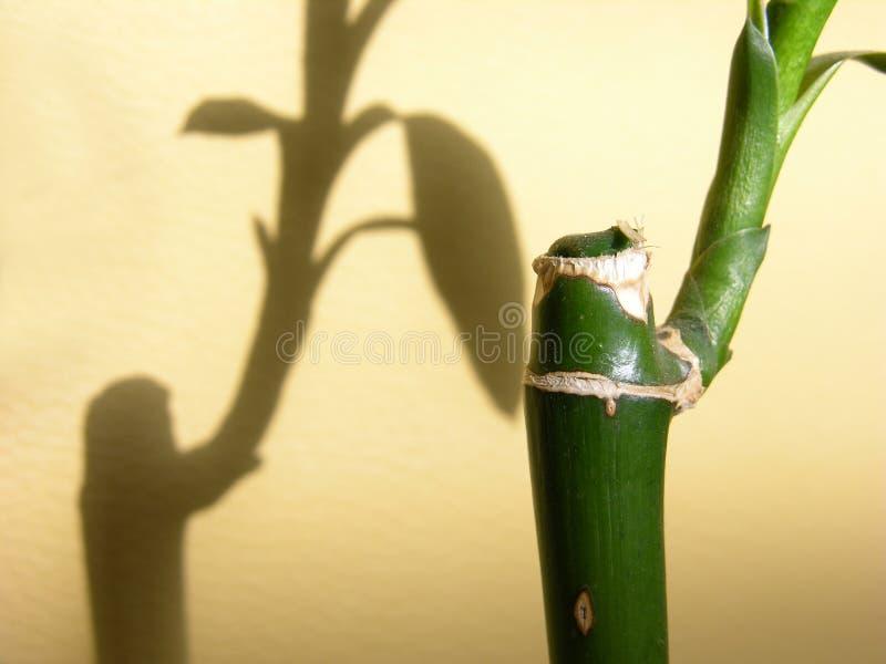 Download Szczegóły bambusowy obraz stock. Obraz złożonej z zakończenie - 125819