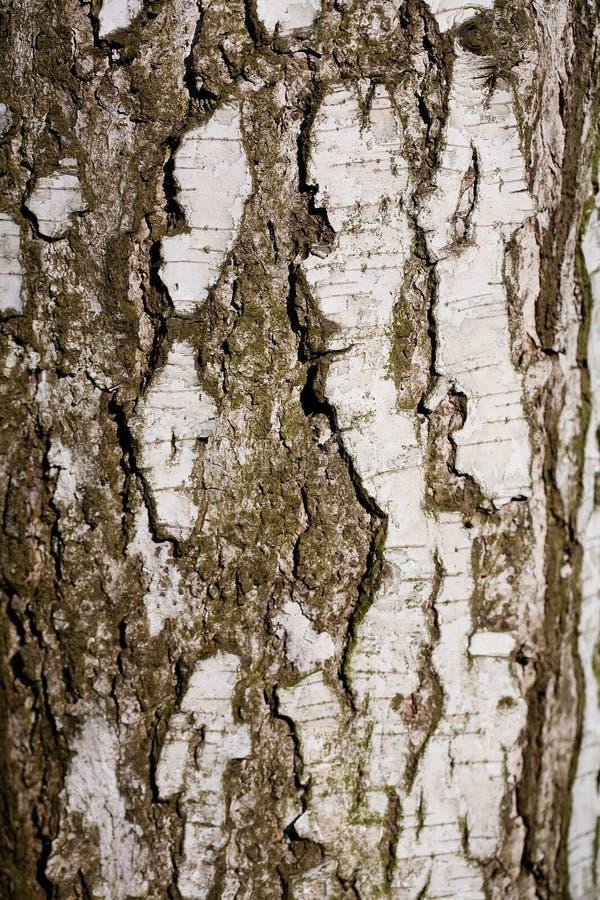 Szczeg?? drzewna barkentyna zdjęcie royalty free