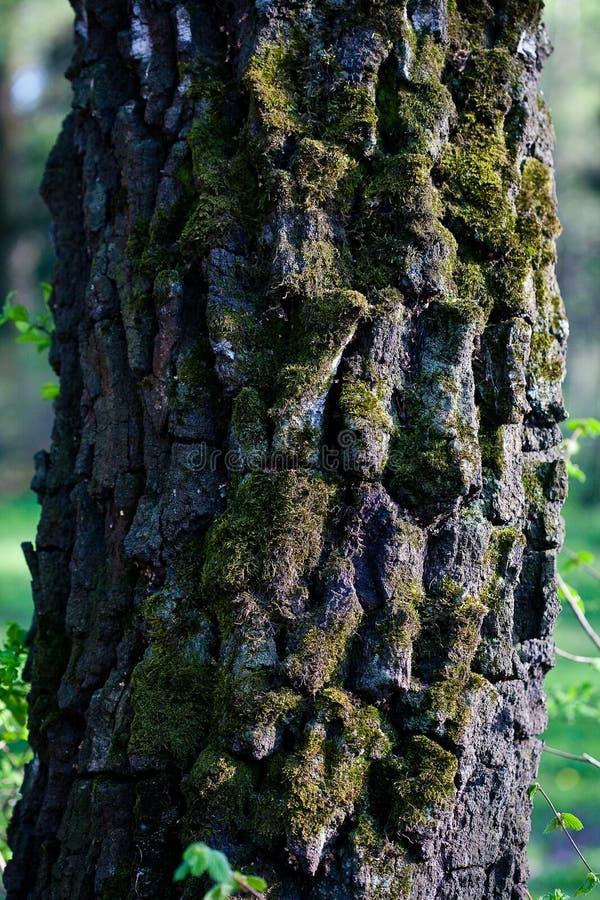 Szczeg?? drzewna barkentyna obraz royalty free