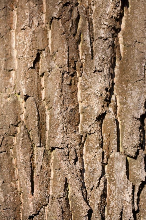 Szczeg?? drzewna barkentyna obraz stock