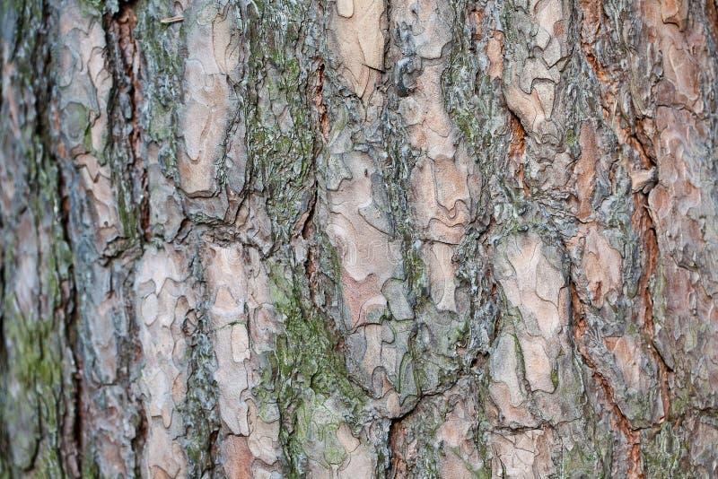 Szczeg?? drzewna barkentyna zdjęcia stock