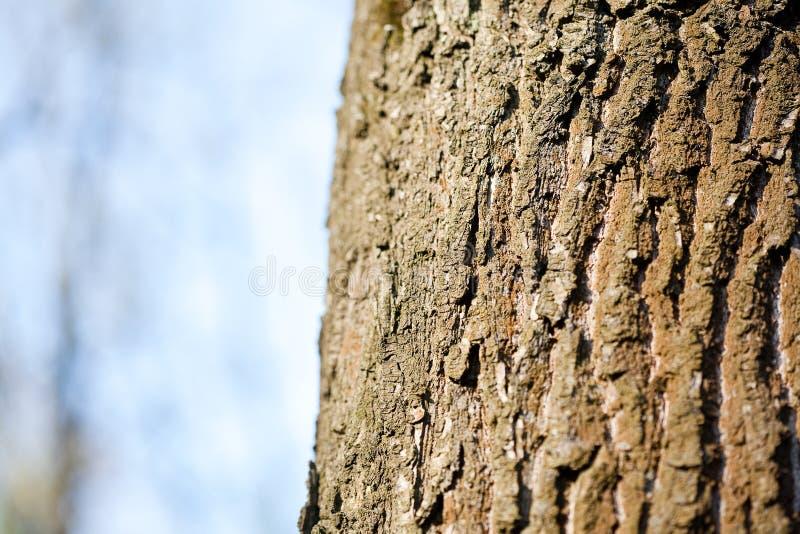 Szczeg?? drzewna barkentyna fotografia stock