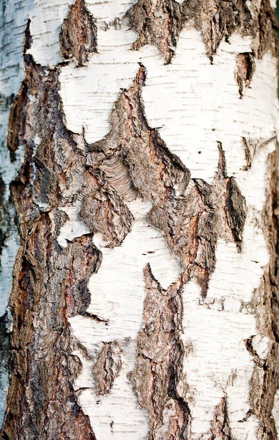 Szczeg?? drzewna barkentyna fotografia royalty free