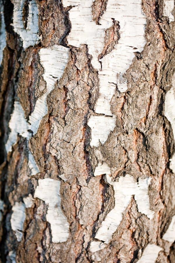 Szczeg?? drzewna barkentyna obrazy royalty free