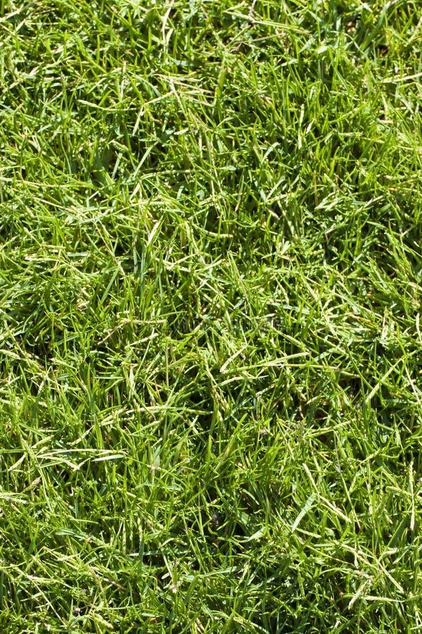 Szczeg?? pi?knej zieleni skoszony gazon fotografia royalty free