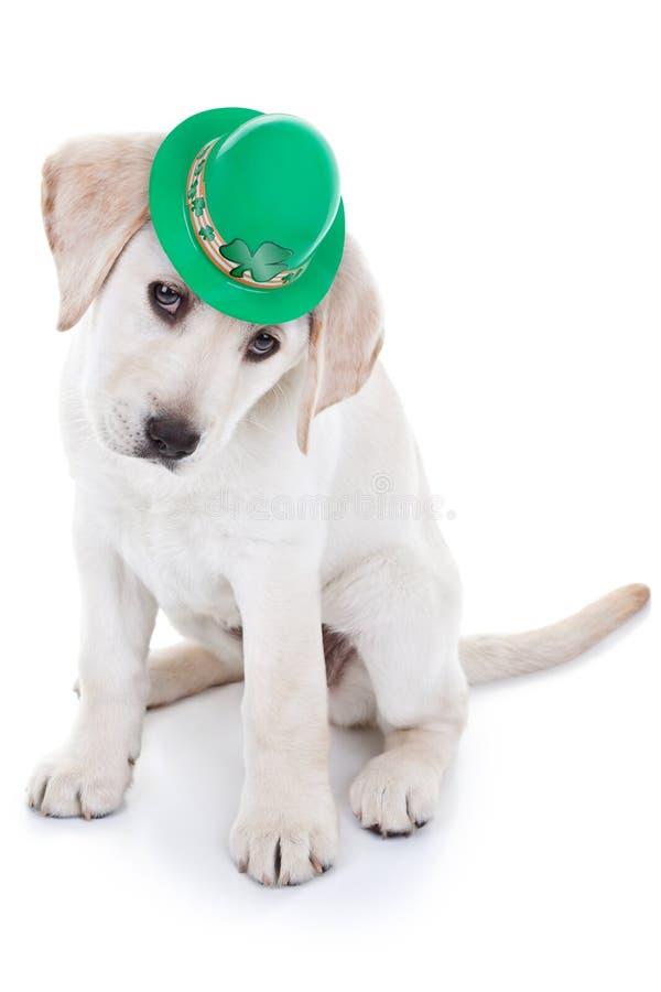 Szczeniak dla świętego Patrick zdjęcia stock