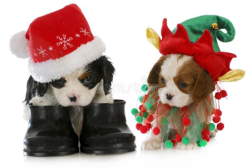 Szczeniak i elf Santa obrazy royalty free