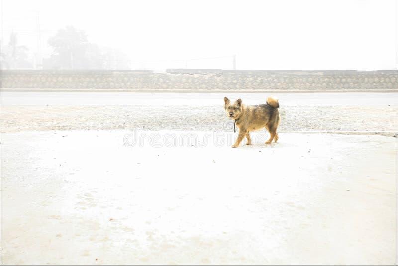Szczeniak jest preghnant na białym śniegu obraz stock