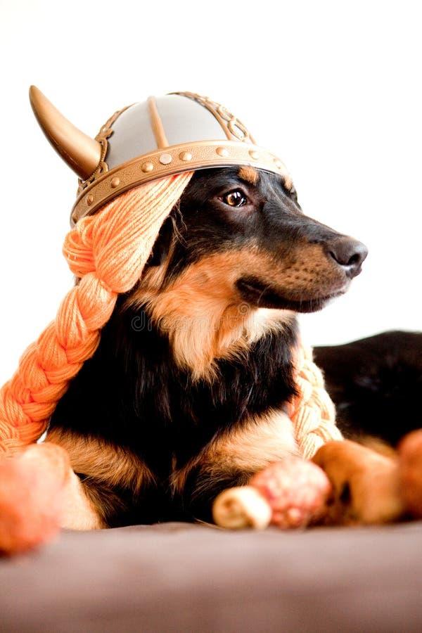 szczeniak Viking zdjęcie royalty free