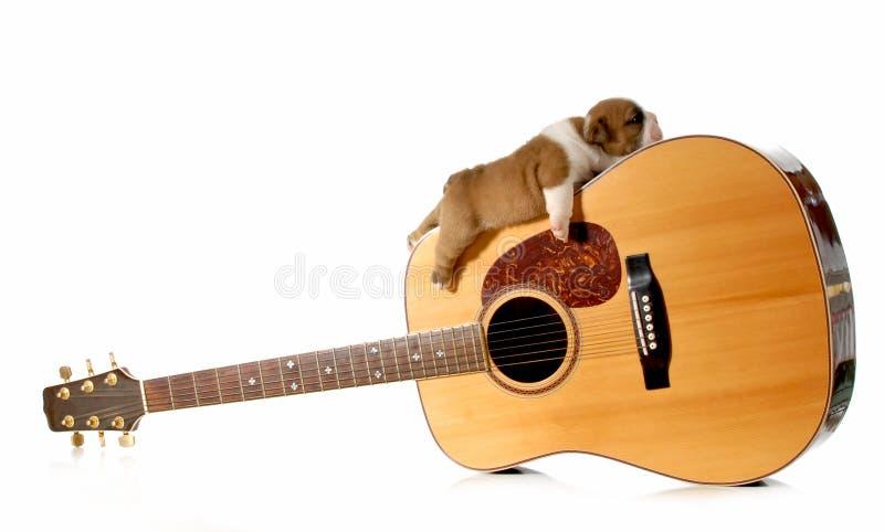 Szczeniaka dosypianie na gitarze obraz royalty free