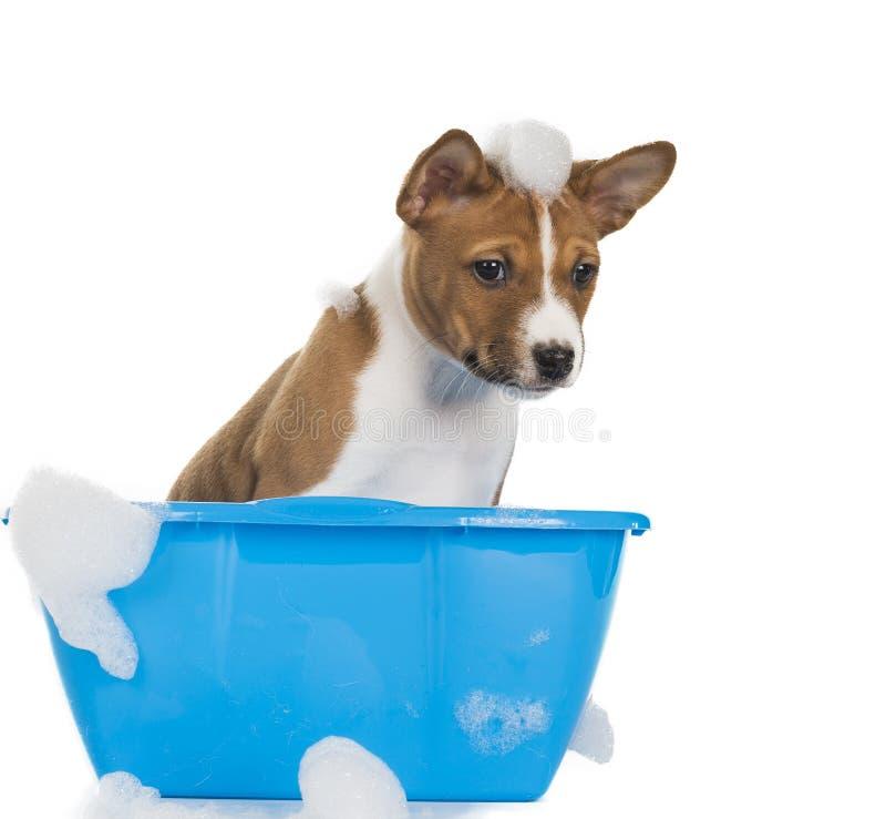 Szczeniaka pies w suds zdjęcie stock