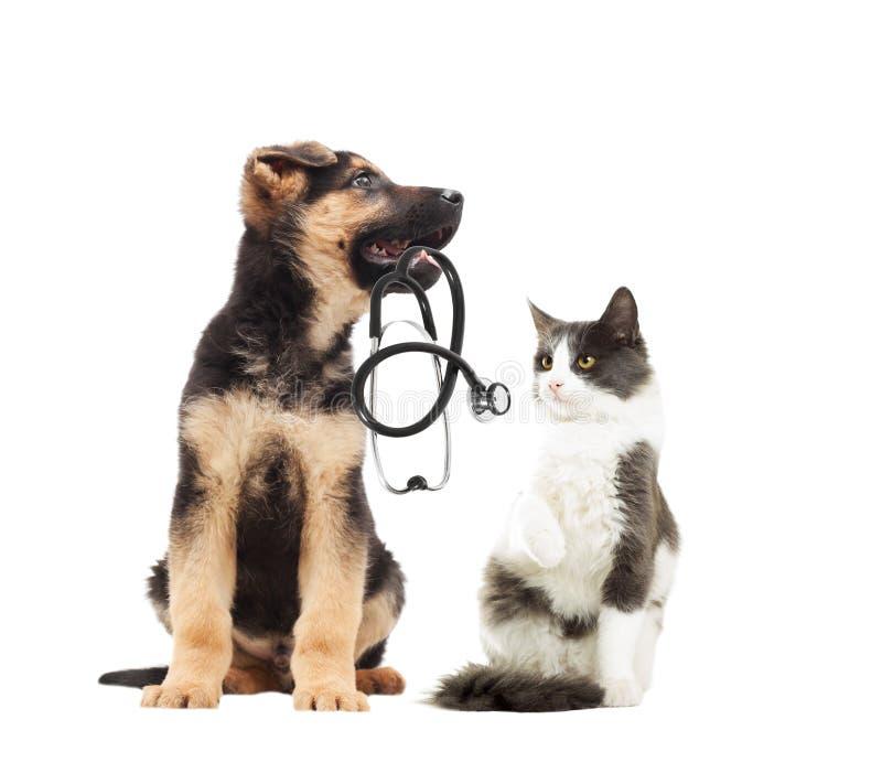 Szczeniaka weterynarz, kot i stetoskop obraz royalty free
