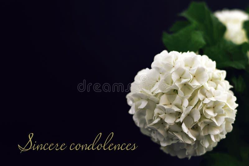 Szczere kondolencje Kondolencje karta zdjęcie stock
