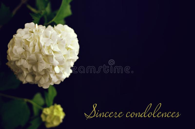 Szczery kondolencje tekst pisać na kondolencje karcie zdjęcia royalty free
