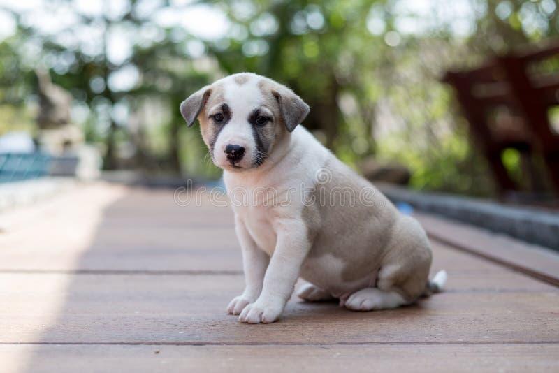 Szczery pies, mały śliczny szczeniaka pies zdjęcia stock