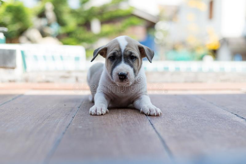 Szczery pies, mały śliczny szczeniaka pies fotografia stock