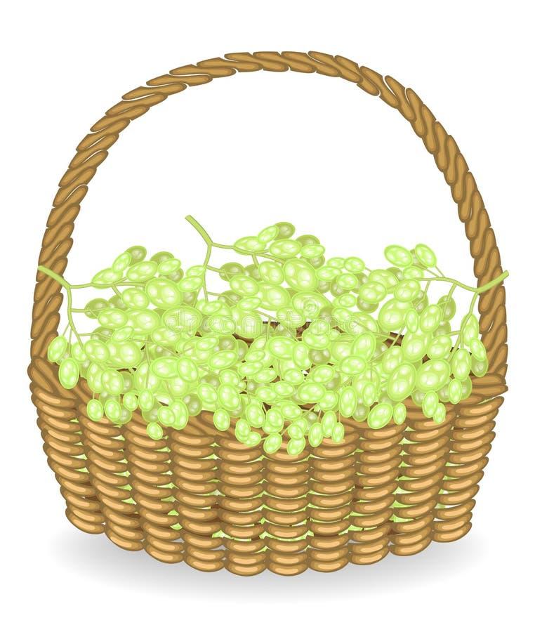 Szczodry żniwo W łozinowego kosza pięknych świeżych winogronach w koszu Owoc jest bardzo smakowita i witamino Jagody są ilustracja wektor