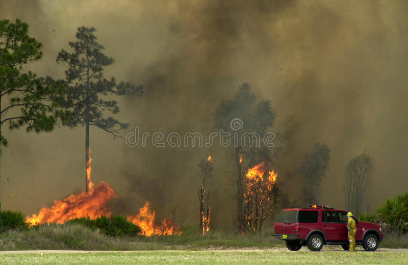 szczotkarski ogień Florida zdjęcia stock